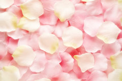 Background texture of pink and white rose petals Stock Image