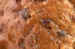 Background texture of a porous brown bread Stock Photos