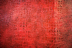Background texture of red snake skin stock images