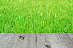 Background or texture on the Rice. Background or texture closeup color Background or texture on the Rice Stock Photography