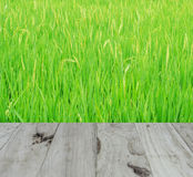 Background or texture on the Rice. Background or texture closeup color Background or texture on the Rice Royalty Free Stock Photo