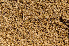 Background texture of rice seed Royalty Free Stock Photography