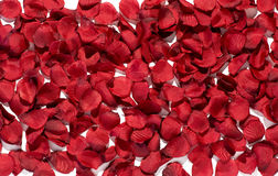 Background texture of rich red rose petals Royalty Free Stock Image