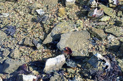 Background texture of rocks in a stream Stock Image