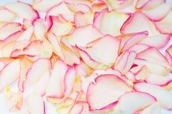 Background texture of rose petals. Romantic background texture of scattered rose petals stock images