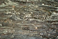 Background, texture - surface of the petrified wood royalty free stock photo