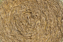 Background texture, round straw bale Royalty Free Stock Images