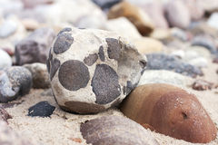 Background texture from sea stones Stock Photography