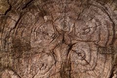 Background texture of the slice of the old brown wood. royalty free stock photo