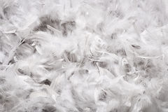Background texture of soft white down feathers. Background texture of a thick layer of soft white down feathers, probably from a duck or goose, viewed full frame royalty free stock images