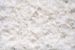 Background texture of soft white feathes Royalty Free Stock Photos