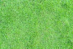 Background texture with space for writing. Fresh green grass. Vi royalty free stock photography