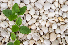 Background texture of stone wall.  Royalty Free Stock Photos