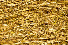 Background from  texture of straw Royalty Free Stock Photos