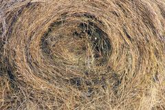 Background of straw texture, spiral pattern. Background texture of straw, spiral pattern, careless bunch of hay stock image