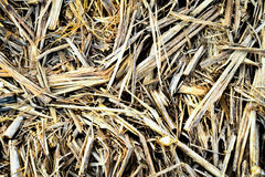 Background, texture of sugar cane straw. From Mauritius stock photography