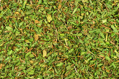 Background texture of tarragon herb Royalty Free Stock Image