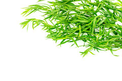 Background texture of tarragon herb seasoning Stock Photography