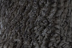 Background texture of tree bark. Skin the bark of a tree that traces cracking Stock Photos