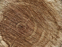 Background texture of a tree cut down. Background, cut down a tree, scratched, wooden structure, wooden texture Royalty Free Stock Photography