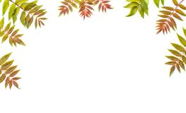 Multi-colored carved leaves of a tree lie on a white background royalty free stock images