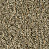 Background texture tree. seamless texture stock images
