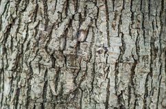 Background texture of a tree trunk Stock Photography