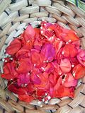 Red rose petals with small white flowers in a basket. Background texture, used in arrangements flowers, aroma and colour, flora and nature Stock Photos