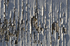 Background texture white cracked paint on wooden surface Royalty Free Stock Photography