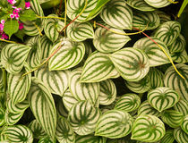 White leaves with green details. Stock Image