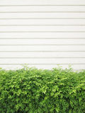 Background texture from a white wall with parallel horizontal lines and green plants Stock Images