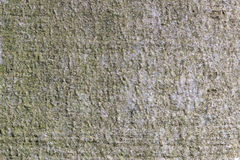 Background, texture wood, bark of beech tree,. Background nature, texture, wood. Bark of a beech tree royalty free stock photography