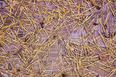Background,  texture,  yellow pine needles on wooden board, stock photos