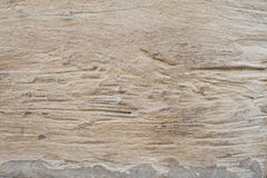 Background textured old wood splat have scratch. Nature Royalty Free Stock Photo