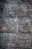 The background is a textured wall of large, plain decorative bricks and a dry woven plant.  royalty free stock image