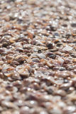 Background textures sea shells Stock Images
