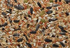 Mixed bird seed up close. royalty free stock images