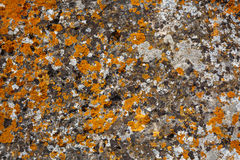 Background textures. Stone texture close-up with colorful spots Royalty Free Stock Image