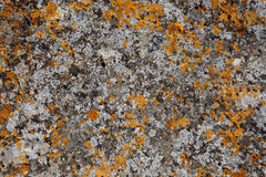 Background textures. Stone texture close-up with colorful spots Stock Images