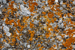 Background textures. Stone texture close-up with colorful spots Royalty Free Stock Photography