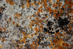 Background textures. Stone texture close-up with colorful spots Stock Image