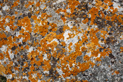 Background textures. Stone texture close-up with colorful spots Stock Photography