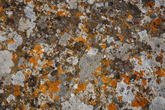 Background textures. Stone texture close-up with colorful spots Royalty Free Stock Images