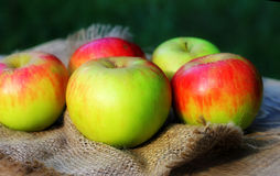 Background  for Thanksgiving Day with apples on coarse cloth sacking Royalty Free Stock Images