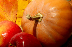 Background for Thanksgiving Day with apples and pumpkin close up