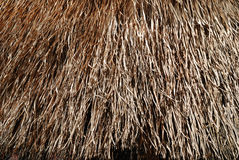Background from thatch Stock Photography