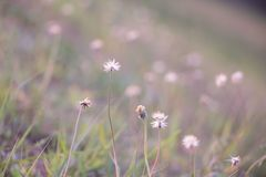 Background tiny flower evening. Royalty Free Stock Photography
