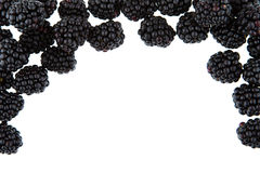 Background for titles with blackberries. On white background Stock Photography