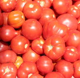 Background tomatoes Royalty Free Stock Images