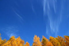 Background with tops of autumn trees under sky Stock Image